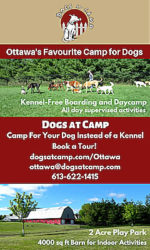 dogs-at-camp-display-ad