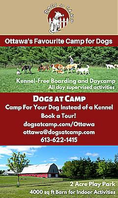 dogs-at-camp-display-ad